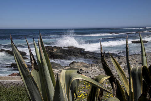 Shore Through the Aloe
